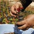 Palestinian flower pots