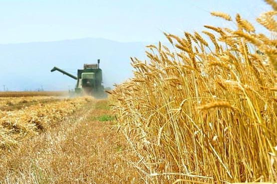 Iran-agriculture
