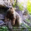 Lovely, Unique Wildlife of Iran Mazandaran Province