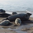 Iran caspian sea seals