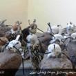 smuggled birds