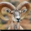 Iran-Laristan Wildlife