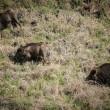 Iran-Wildlife-Golestan National Park