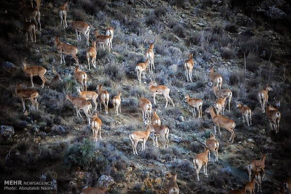 Iran-Wildlife-Golestan National Park6
