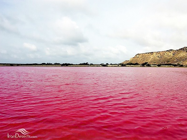 The Pink Wetland of Lipar in Southeastern Iran
