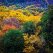 autumn in Iran's Alangdareh Jungle Park