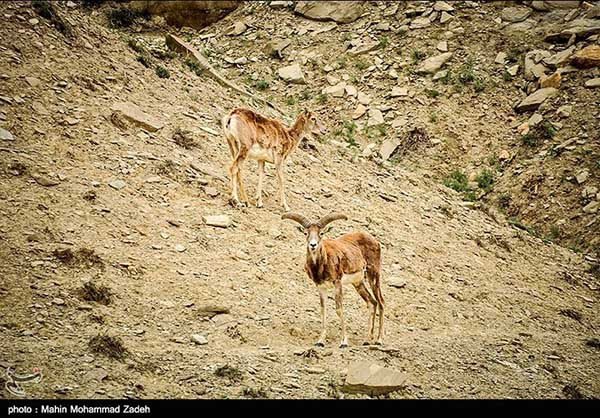 Wildlife in Bijar Protected Zone