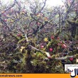 Iran Alimestan Forest