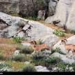 Iran-Bahram-e Gur Protected Area