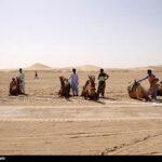 Camel Racing (11)