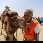 Camel Racing (12)