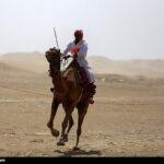 Camel Racing (14)