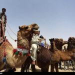 Camel Racing (16)