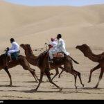 Camel Racing (18)