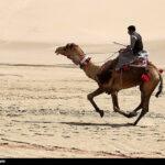 Camel Racing (19)