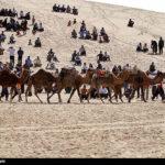 Camel Racing (2)