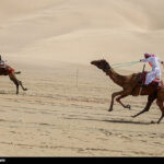 Camel Racing (20)