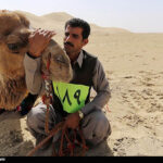 Camel Racing (21)