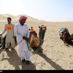 Camel Racing (22)