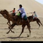 Camel Racing (23)