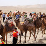 Camel Racing (3)