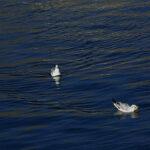 Chitgar lake98_b
