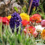 Flower Garden_IMG_4355