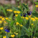 Flower Garden_IMG_4371