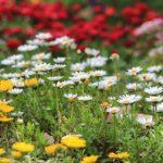 Flower Garden_IMG_4411