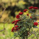 Flower Garden_IMG_4453