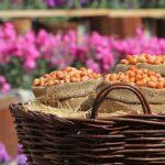 Flower Garden_IMG_4476
