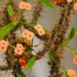 Flower Garden_IMG_4501