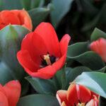 Flower Garden_IMG_4535