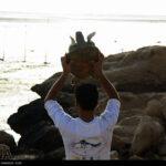 Green Sea Turtles-4986521