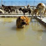 Hayat Animal Sanctuary_7941