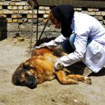 Hayat Animal Sanctuary_7944