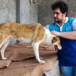 Hayat Animal Sanctuary_7946