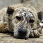 Hayat Animal Sanctuary_7950