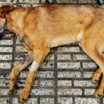 Hayat Animal Sanctuary_7952
