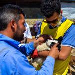 Hayat Animal Sanctuary_7954