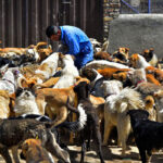Hayat Animal Sanctuary_7967