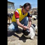 Hayat Animal Sanctuary_7973