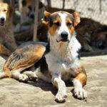 Hayat Animal Sanctuary_8031