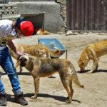 Hayat Animal Sanctuary_8033