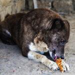 Hayat Animal Sanctuary_8091