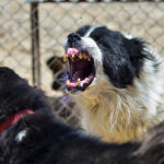 Hayat Animal Sanctuary_8095