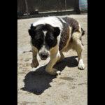 Hayat Animal Sanctuary_8098