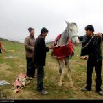 Horse-Riding82