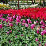 Iranian Garden73