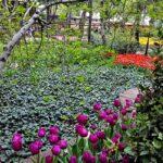 Iranian Garden74